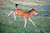 HOR 02 KH0017 01