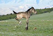 HOR 02 KH0018 01