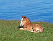 HOR 02 KH0024 01
