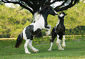 HOR 02 MB0004 01