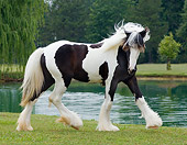 HOR 02 MB0007 01