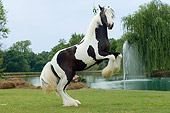 HOR 02 MB0008 01