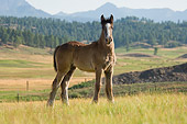 HOR 02 MB0009 01