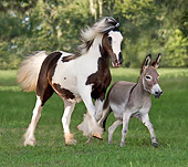 HOR 02 MB0010 01