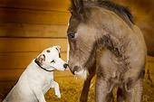 HOR 02 MB0011 01