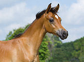 HOR 02 MB0012 01