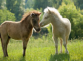 HOR 02 MB0016 01
