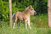HOR 02 MB0019 01