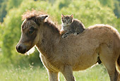 HOR 02 MB0031 01