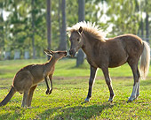 HOR 02 MB0032 01