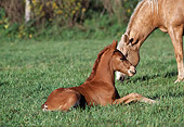 HOR 02 RK0032 01