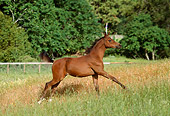 HOR 02 RK0035 07