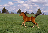 HOR 02 RK0052 02