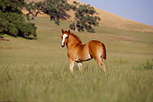 HOR 02 RK0055 12