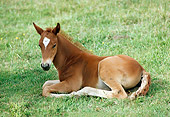 HOR 02 RK0061 17
