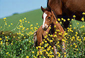 HOR 02 RK0062 91