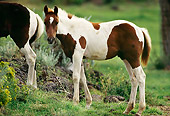 HOR 02 RK0113 01