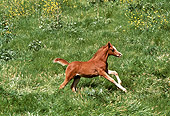HOR 02 RK0157 01