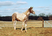 HOR 02 RS0001 01