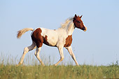 HOR 02 SS0019 01