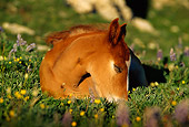 HOR 02 TL0002 01