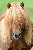 HOR 03 AC0009 01