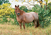 HOR 03 FA0001 01