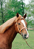 HOR 03 FA0002 01
