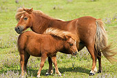 HOR 03 JE0002 01