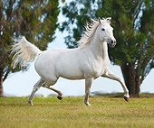 HOR 03 MB0019 01