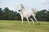 HOR 03 MB0020 01