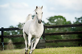 HOR 03 MB0021 01