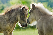 HOR 03 MB0053 01
