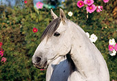 HOR 03 SS0005 01