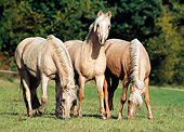 HOR 03 SS0007 01