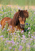 HOR 03 SS0010 01