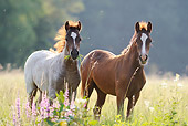 HOR 03 SS0021 01