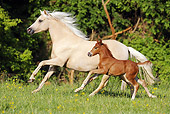 HOR 03 SS0022 01