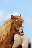 HOR 03 SS0027 01