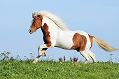 HOR 03 SS0043 01