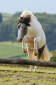 HOR 03 SS0050 01