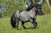 HOR 03 SS0051 01