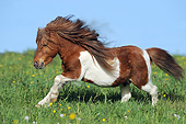 HOR 03 SS0053 01