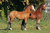 HOR 03 SS0057 01