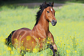HOR 03 SS0058 01