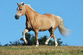 HOR 03 SS0060 01