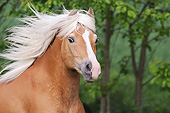HOR 03 SS0061 01