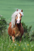 HOR 03 SS0062 01