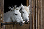 HOR 03 KH0010 01