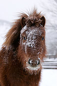 HOR 03 KH0011 01